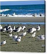 Seagulls Waiting  Canvas Print