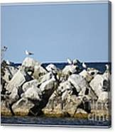 Seaguls On Boulders In Lake Erie Canvas Print