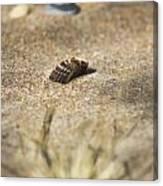 Seahells V3 Canvas Print