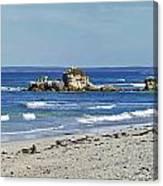 Seal Bay Beach Canvas Print