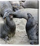 Seal Spa. Men's Talk2 Canvas Print