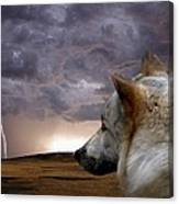 Searching For Home Canvas Print