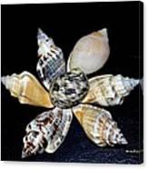 Seashell Floral Canvas Print