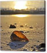 Seashells and Sunshine Canvas Print