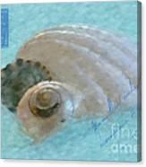 Seashells In Aqua Canvas Print