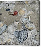 Seashells In The Surf Canvas Print