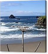 Seaside Solitude Canvas Print