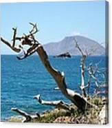 Seaside Tree Canvas Print