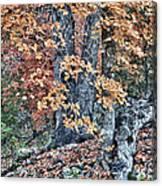 Season Change At Lost Maples Canvas Print