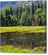 Seasonal Duck Pond Canvas Print