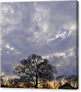 Sedgeley Tree Canvas Print