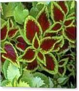 Sedona Floral Canvas Print