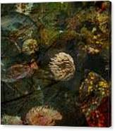See Of Fossil Three Canvas Print