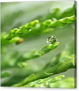 See The World In The Morning Dew  Canvas Print