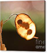Seeds And Stems Canvas Print