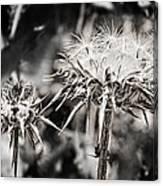 Seedy Neighborhood In Bw Canvas Print