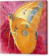 Self Esteem Butterfly Canvas Print