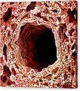 Sem Of Lung Canvas Print