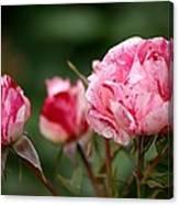Sentimental Rose Canvas Print