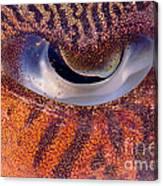 Sepia Cuttlefish Canvas Print