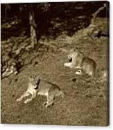 Sepia Lionesses Canvas Print