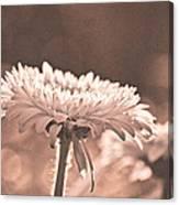Sepia Sweetness Canvas Print