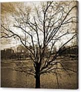 Sepia Tree Canvas Print