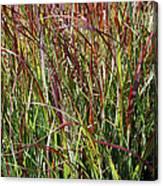 September Grasses By Jrr Canvas Print