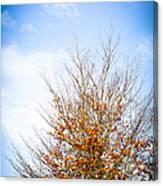 September Sky Canvas Print