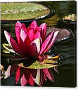 Serene Pink Water Lily Reflection Canvas Print