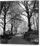 Serene Winding Country Road Canvas Print