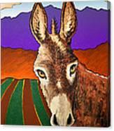 Serious Donkey Canvas Print