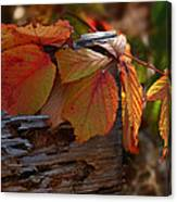 Shade In Fall Canvas Print