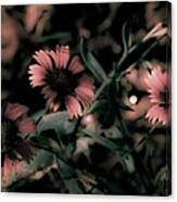 Shaded In The Evening Canvas Print