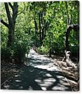 Shaded Paths In Central Park Canvas Print