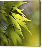 Shades Of Green And Gold. Canvas Print