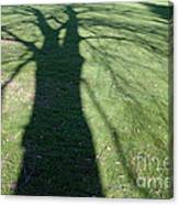 Shadow Of A Tree On Green Grass Canvas Print