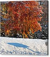 Shadows In The Snow Canvas Print