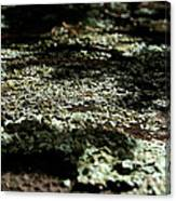 Shady Moss Canvas Print