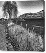 Shaggy Tree Canvas Print