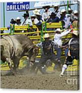 Rodeo Shaking It Up Canvas Print