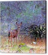 Shasta County Deer  Canvas Print