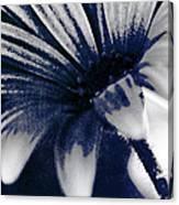 She Wore Blue Velvet Canvas Print