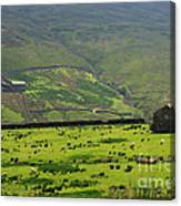 Sheep Graze In A Pasture In Swaledale Canvas Print