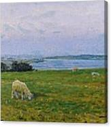 Sheep Grazing Canvas Print
