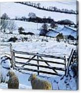 Sheep, Ireland Sheep And A Farm During Canvas Print