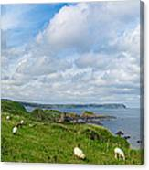 Sheep On A Hill Canvas Print