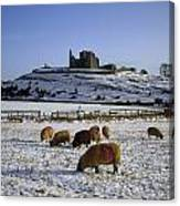 Sheep On A Snow Covered Landscape In Canvas Print