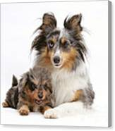 Sheepdog With Puppy Canvas Print