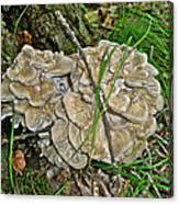 Shelf Fungus - Grifola Frondosa Canvas Print